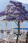 Wisteria climbing over arbour, recliner chairs on mediterranean garden terrace on shore of Lake Como