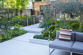 Stone paving, clipped box balls under olive tree grove, Euphorbia characias subsp. wulfenii, contemporary outdoor sofa by Gloster, Tulipa 'White Triumphator' and 'Spring Green'