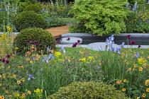 Verbascum 'Cotswold Queen', Geum 'Totally Tangerine', large mounds of clipped Taxus baccata, Cirsium rivulare 'Atropurpureum', Iris 'Tamberg', Euonymus alatus 'Compactus', Portland cement concrete
