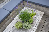 Lavender and herbs in pots on reclaimed wooden table, cushions on built-in benches