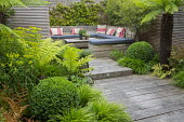 Shady courtyard garden, Dicksonia antarctica, Hakonechloa macra, clipped Buxus sempervirens balls, built-in benches with cushions, Euphorbia palustris, Phyllostachys nigra, Dryopteris erythrosora, rec...