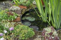 Raised circular pond, water lily, iris, sempervivums in air bricks