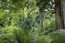Woodland valley garden