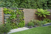 Living green wall in contemporary town garden, timber fence, astelia, heuchera