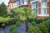 Low maintenance front garden, Dicksonia antarctica, slate mulch, box hedges