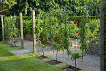 U-trained fruit tree screen
