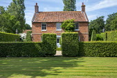 Clipped hornbeam hedges in front of house