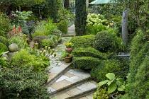 Clipped box hedge, stone steps, Eucomis bicolor in pot, Hydrangea arborescens 'Annabelle'