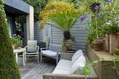 Outdoor Rattan sofa with cushions on decking, grey painted fence, pyracantha