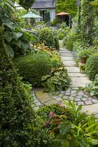 Shady urban garden, Begonia grandis subsp. evansiana, lavender along stone path, fuchsia, Salvia 'Amistad', Myrsine africana topiary