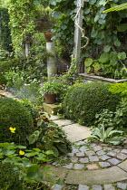 Stone paving, raised pond, Begonia grandis subsp. evansiana, clipped box domes, geraniums, Actinidia deliciosa