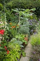 Eucomis, Melianthus major, crocosmia, Hesperantha coccinea 'Major', Phlox paniculata 'Blue Paradise' in pots, Alcea rosea 'Halo Cream' (Halo Series)