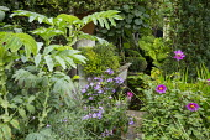 Melianthus major, Phlox paniculata 'Blue Paradise', Dahlia 'Cornish Ruby', pond