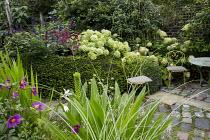 Chairs on stone patio in small urban garden, Eucomis pole-evansii, yew hedge, Hydrangea arborescens 'Annabelle', Salvia 'Amistad', Hylotelephium 'Red Cauli' syn. sedum, Dahlia 'Cornish Ruby', Hydrange...