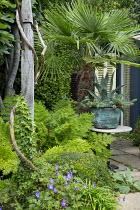 Trachycarpus fortunei, Agave americana in cooper container, geraniums, box dome, Osmunda regalis