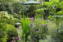 Chairs under umbrella on patio, Melianthus major, Hydrangea arborescens 'Annabelle' and Hydrangea paniculata 'Limelight', yew hedge, Phlox paniculata 'Blue Paradise', Dahlia 'Cornish Ruby'