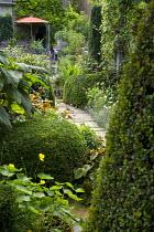 Path through shady urban garden leading to parasol by house, Myrsine africana, Cape myrtle