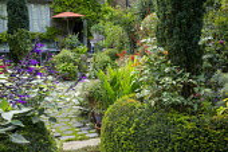 Stone patio, Taxus baccata, Salvia 'Amistad', Salvia confertiflora, Eucomis pole-evansii in pot