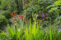 Salvia confertiflora, Dahlia 'Cornish Ruby', Miscanthus sinensis 'Morning Light', Hesperantha coccinea 'Major', clematis, Eucomis pole-evansii, crocosmia, Eryngium giganteum, Alcea rosea 'Halo Cream'...
