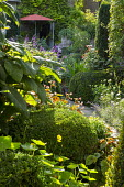 Path through shady urban garden leading to parasol by house, box and yew topiary domes