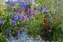 Tibouchina urvilleana, Dierama pulcherrimum, agapanthus, Canna 'Musifolia', Canna indica 'Purpurea'