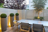 Table and chairs in small courtyard garden, white painted wooden fence, boxs ball in tall contemporary containers, olive tree underplanted with Rosmarinus officinalis Prostratus Group, candles