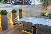 Candles on table and chairs in small courtyard garden, white painted wooden fence, boxs ball in tall contemporary containers, olive tree underplanted with Rosmarinus officinalis Prostratus Group