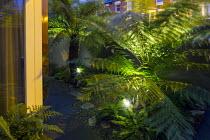 Up-lit Dicksonia antarctica in small urban front garden