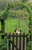 View through arch and gate to free range chickens in orchard