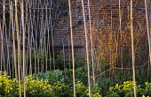 Pattern of bamboo canes and hazel twig pea supports in walled kitchen garden