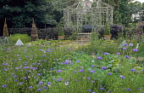 Timber framed summerhouse, drift of cornflowers
