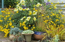 Terracotta containers with succulents, Bidens aurea, petunias, grasses