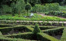 Kitchen garden, standard bay tree, box parterre, nasturtiums