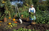 Woman harvesting vegetables in kitchen garden, squashes and pumpkins