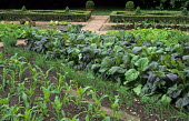 Rows of vegetables in kitchen garden, Sweet corn, shallots, box parterre