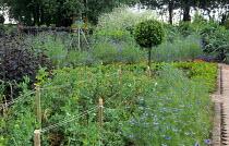 Nigella damascena and marigolds in kitchen garden, bay tree standard