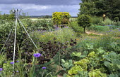 Metal plant support, view across kitchen garden to arbour, scarecrow