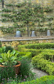 Vegetable garden, variegated sorrel in container, chives, trained espaliered apple tree on stone wall, glass cloches