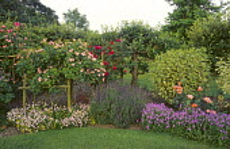 Roses on frame, lavender, espalier fruit tree