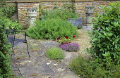 Gravel and stone terrace, dry-stone wall, ligustrum, herbs in paving cracks, chimney pot containers with Pelargonium 'Renate Parsley'
