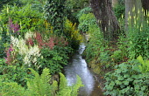 Stream garden, astilbe, ferns, Digitalis lutea
