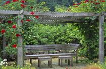 Rosa 'Delmur' Altissimo climbing over pergola, wooden bench and tables by Gaze Burvill