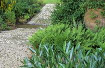 Cobbled path, stream, ferns, ford