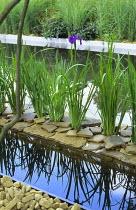 Iris ensata on island in pond