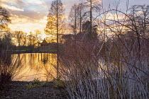 Pseudolarix amabilis by pond at sunset