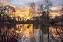 Reflections of Pseudolarix amabilis in pond at sunset, Cornus sericea 'Baileyi', pagoda