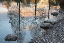 Reflections of Pseudolarix amabilis in pond at sunset, rocks