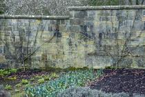 Fan trained espaliered fruit trees on stone wall, leeks