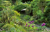 Terraced beds with santolina, osteospermum, Allium hollandicum, phormiums, cordylines, parasol