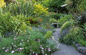 Concrete crazy-paving path to bench, borders with osteospermum, santolina, phormiums, yuccas and cordylines